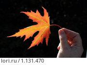 Кленовый лист. Стоковое фото, фотограф Виталий Гречко / Фотобанк Лори