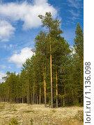 Купить «Летний пейзаж с соснами», фото № 1136098, снято 9 сентября 2009 г. (c) Вадим Субботин / Фотобанк Лори