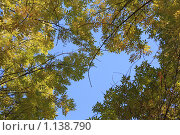 Сквозь листву. Стоковое фото, фотограф Наталья Хваткова / Фотобанк Лори