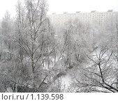 Березы в снегу. Стоковое фото, фотограф Анатолий Сверчков / Фотобанк Лори