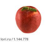 Гусеница махаона на красном яблоке. Стоковое фото, фотограф Наталья Ревкина / Фотобанк Лори