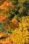 Осенние листья, фото № 1147082, снято 23 сентября 2008 г. (c) Argument / Фотобанк Лори