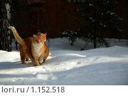 Купить «Симпатия», фото № 1152518, снято 14 февраля 2008 г. (c) Юля Волкова / Фотобанк Лори