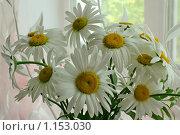 Купить «Букет из садовых ромашек», эксклюзивное фото № 1153030, снято 23 сентября 2009 г. (c) Татьяна Белова / Фотобанк Лори