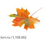 Купить «Осенний кленовый лист», фото № 1158002, снято 24 сентября 2009 г. (c) Литова Наталья / Фотобанк Лори