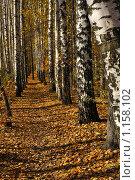 Купить «Дорожка в парке», фото № 1158102, снято 16 октября 2009 г. (c) Литова Наталья / Фотобанк Лори