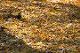 Опавшая листва, фото № 1160378, снято 18 октября 2009 г. (c) Сергей Лаврентьев / Фотобанк Лори