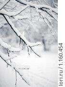 Купить «Зима», фото № 1160454, снято 18 февраля 2009 г. (c) Станислав Фридкин / Фотобанк Лори