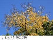 Осень. Стоковое фото, фотограф Сивер Наталья Александровна / Фотобанк Лори