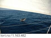 Дельфин с яхтой. Стоковое фото, фотограф Виктор Пивоваров / Фотобанк Лори