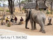 Дикий слон и охранники масаи. Редакционное фото, фотограф Димитрий Сухов / Фотобанк Лори
