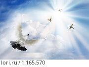 Голуби в небе. Стоковое фото, фотограф Ольга Киселева / Фотобанк Лори