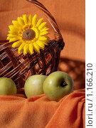 Подсолнух и яблоки. Стоковое фото, фотограф Бауэр Александра / Фотобанк Лори