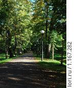 Аллея парка. Стоковое фото, фотограф Александр Виноградов / Фотобанк Лори