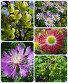 Летние растения и ягоды, эксклюзивное фото № 1169206, снято 26 июня 2008 г. (c) lana1501 / Фотобанк Лори