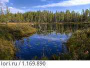 Купить «Лесное озеро», фото № 1169890, снято 19 августа 2018 г. (c) Кекяляйнен Андрей / Фотобанк Лори