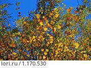 Купить «Осенний лес», эксклюзивное фото № 1170530, снято 7 октября 2009 г. (c) lana1501 / Фотобанк Лори