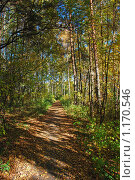Купить «Осенний лес», эксклюзивное фото № 1170546, снято 7 октября 2009 г. (c) lana1501 / Фотобанк Лори