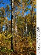 Купить «Осенний лес», эксклюзивное фото № 1170550, снято 7 октября 2009 г. (c) lana1501 / Фотобанк Лори
