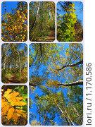 Купить «Осенний лес», эксклюзивное фото № 1170586, снято 7 октября 2009 г. (c) lana1501 / Фотобанк Лори