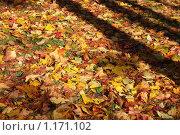 Купить «Осень», фото № 1171102, снято 15 октября 2009 г. (c) Наталья Белотелова / Фотобанк Лори