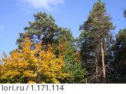 Купить «Осень», фото № 1171114, снято 15 октября 2009 г. (c) Наталья Белотелова / Фотобанк Лори