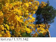 Купить «Осень», фото № 1171142, снято 15 октября 2009 г. (c) Наталья Белотелова / Фотобанк Лори