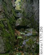 Купить «Ущелье в скалах. Южный Урал. Башкирия.», фото № 1171250, снято 16 февраля 2019 г. (c) Sergey Toronto / Фотобанк Лори
