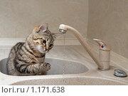 Купить «Кот играет водой из крана», фото № 1171638, снято 24 октября 2009 г. (c) Светлана Чуйкова / Фотобанк Лори