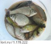 Кубанская рыбка. Стоковое фото, фотограф Елена Скопинцева / Фотобанк Лори