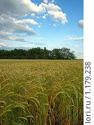 Купить «Урожай», фото № 1179238, снято 14 июня 2009 г. (c) Сергей Литвиненко / Фотобанк Лори