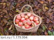 Купить «Яблоки в корзине», фото № 1179994, снято 24 октября 2009 г. (c) Илюхина Наталья / Фотобанк Лори