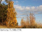 Купить «Осень», фото № 1180774, снято 5 октября 2008 г. (c) Любецкая Марина / Фотобанк Лори