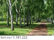 Березовая аллея. Стоковое фото, фотограф Рычков Андрей / Фотобанк Лори