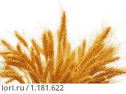 Купить «Колосья пшеницы», фото № 1181622, снято 12 сентября 2006 г. (c) Elnur / Фотобанк Лори