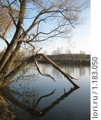Купить «Сломанное дерево на берегу реки», фото № 1183050, снято 18 октября 2009 г. (c) Виктор Юрасов / Фотобанк Лори