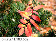 Красное на зеленом. Стоковое фото, фотограф Наталья Хваткова / Фотобанк Лори