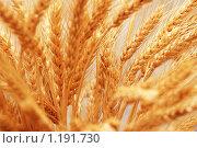 Купить «Колосья пшеницы», фото № 1191730, снято 27 января 2007 г. (c) Elnur / Фотобанк Лори