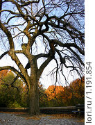 Лиственное дерево осенью. Стоковое фото, фотограф Дмитрий Малахов / Фотобанк Лори