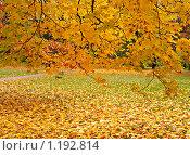 Купить «Осень в парке», фото № 1192814, снято 25 октября 2009 г. (c) Raulin / Фотобанк Лори