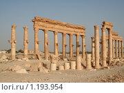 Развалины города Пальмира. Сирия (2009 год). Стоковое фото, фотограф Владимир Ионов / Фотобанк Лори