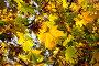Осенние листья, фото № 1194330, снято 9 октября 2005 г. (c) Бабенко Денис Юрьевич / Фотобанк Лори