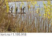 Купить «Мальчишки-рыбаки», фото № 1195918, снято 11 октября 2009 г. (c) Усова Светлана  Юрьевна / Фотобанк Лори