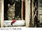 Купить «Деревенский кот сидит за окном», фото № 1198918, снято 7 ноября 2009 г. (c) Евгений Захаров / Фотобанк Лори