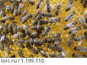 Пчелиная семья. Стоковое фото, фотограф Михаил Рыбачек / Фотобанк Лори
