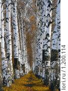 Дорога. Стоковое фото, фотограф Илья Шалафаев / Фотобанк Лори