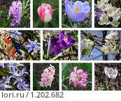 Купить «Весна. Коллаж», фото № 1202682, снято 19 сентября 2019 г. (c) Татьяна Иванова / Фотобанк Лори