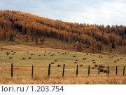 Осенние стога сена. Стоковое фото, фотограф Елена Гришина / Фотобанк Лори