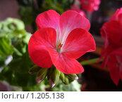 Цветок. Стоковое фото, фотограф Ахметова Алина / Фотобанк Лори