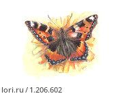 Веселая бабочка Крапивница. Стоковая иллюстрация, иллюстратор Мария Веселова / Фотобанк Лори